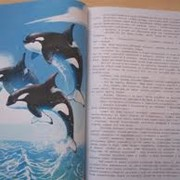 Детские книжки, тирожирование, печатная продукция в ассортименте и под заказ фото