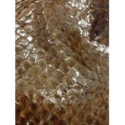 Кожа Рыбы фото