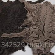 Каракульча сур коричневая (Узбекистан) фото