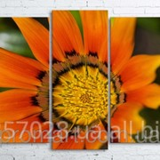 Модульна картина на полотні Помаранчева квітка код КМ100200(176)-015 фото