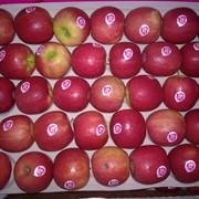 Яблоки, Франция фото