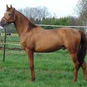 Лошади, лошади кушумской породы фото