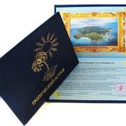 Сертификат подарочный прикол разная тематика качество фото