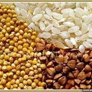 Закупка семян фото