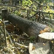 С пил деревьев любой сложности, дрова фото