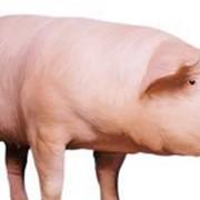 Премикс для Свиней на Откорм 2,5% фото