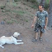 Дрессировка собак в Ялте фото