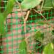 Шпалерная сетка, сетка для птичников, заборные решетки фото