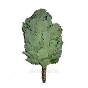 Веник с широкими плотными листьями Кавказский дуб фото