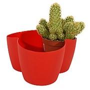 Кактусница на 3 растения (красная) фото