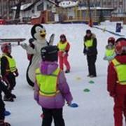 Страна пингвинов фото