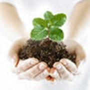 Средства защиты растений . фото
