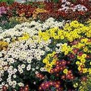 Подбор растений для цветника фото