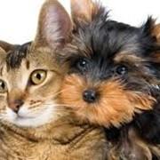 Товары для животных фото