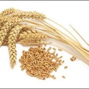 Маркетинговые исследования в сельском хозяйстве фото