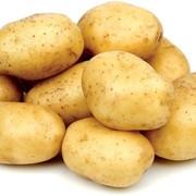 Картофель фото