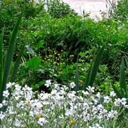 Устройство цветников и клумб №20 фото