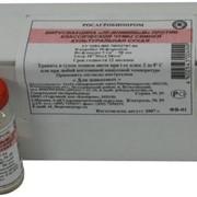 Вирусвакцина «ЛК-ВНИИВВиМ» против классической чумы свиней сухая культуральная фото