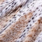 Мех рыси в России фото