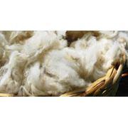 Шерсть овечья грубая (полугрубая) мытая фото
