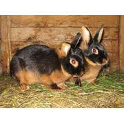 Кролики фото