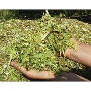 Силос из многолетних бобовых трав