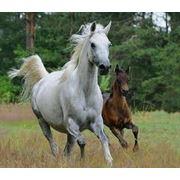 Комбикорм для лошадей фото