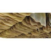 Каучуки. Природный каучук. фото