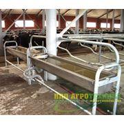 Групповые поилки для коров с подогревом или без фото