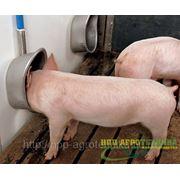 Чашечная поилка для свиней на откорме фото