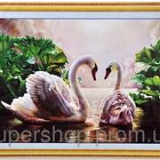Набор для вышивки картины Лебеди 75х53см 373-37010739 фото