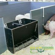 Ящичные автоматы для кормления свиней на откорме серии АКО фото