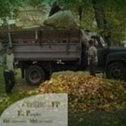 Вывоз листьев фото