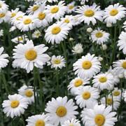 Продажа цветов для выращивания фото