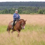 Верховые прогулки в лес, Катание на лошадях фото