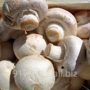 Компания «Bostnord,SRL» занимается производством грибов ,продажей в Молдове и на Экспорт! фото