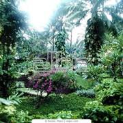 Высадка кустарников фото