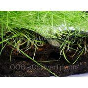 Биомат — Арнит с семенами трав фото