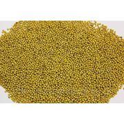 Mustard Seeds фото