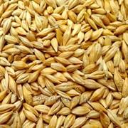 Зерно на Экспорт фото