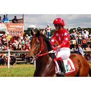 Продажа лошадей различных пород фото