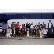 Организация поездок на выставки собак фото