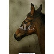 Разведение лошадей фото