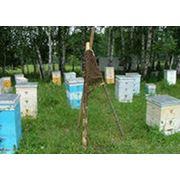 Перевозка пчёл на медосбор кочёвка фото