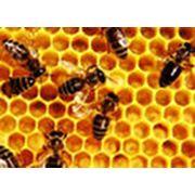 Разведение и содержание пчел фото