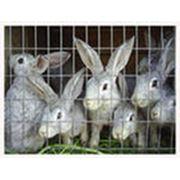 Создание фермы для содержания кроликов фото