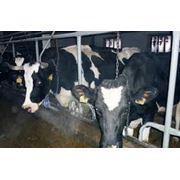 Консультации по уходу и содержанию животных фото