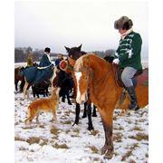 Организация платной охоты в осенний – зимний период. фото