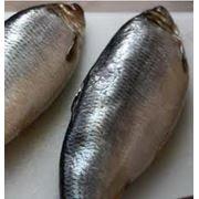 Соление рыбы фото