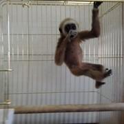 Малыши человекообразных обезьян фото